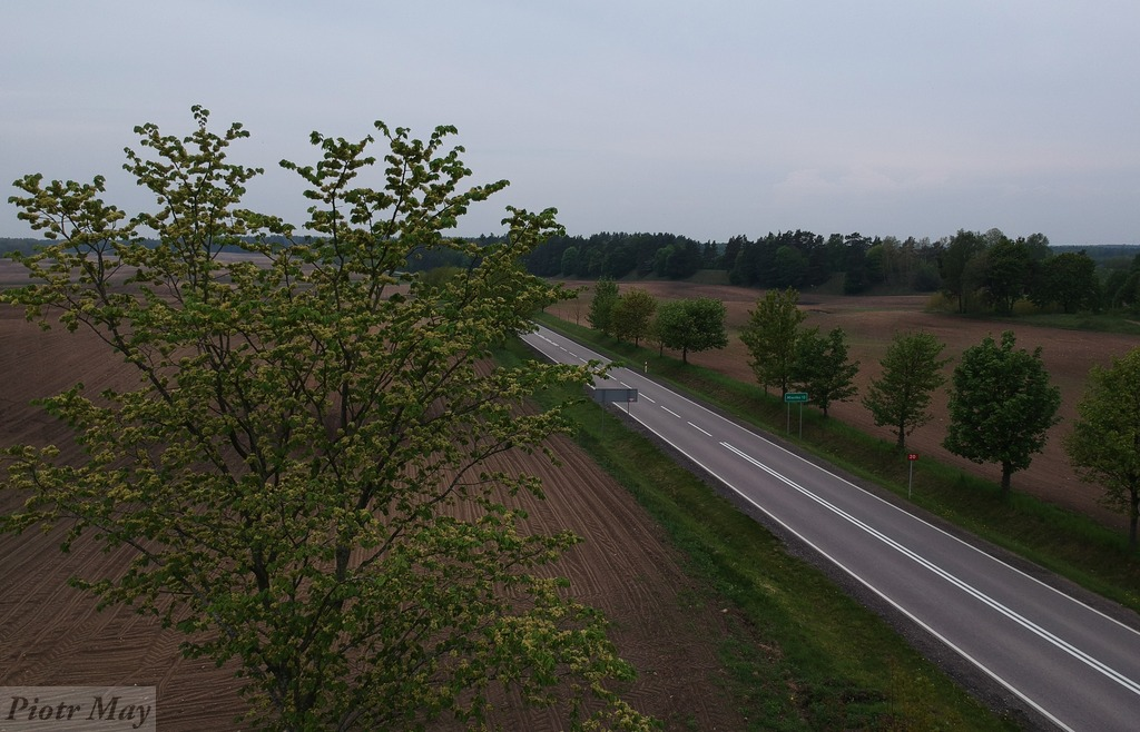 Piaszczyna i okolice. Maj 2019